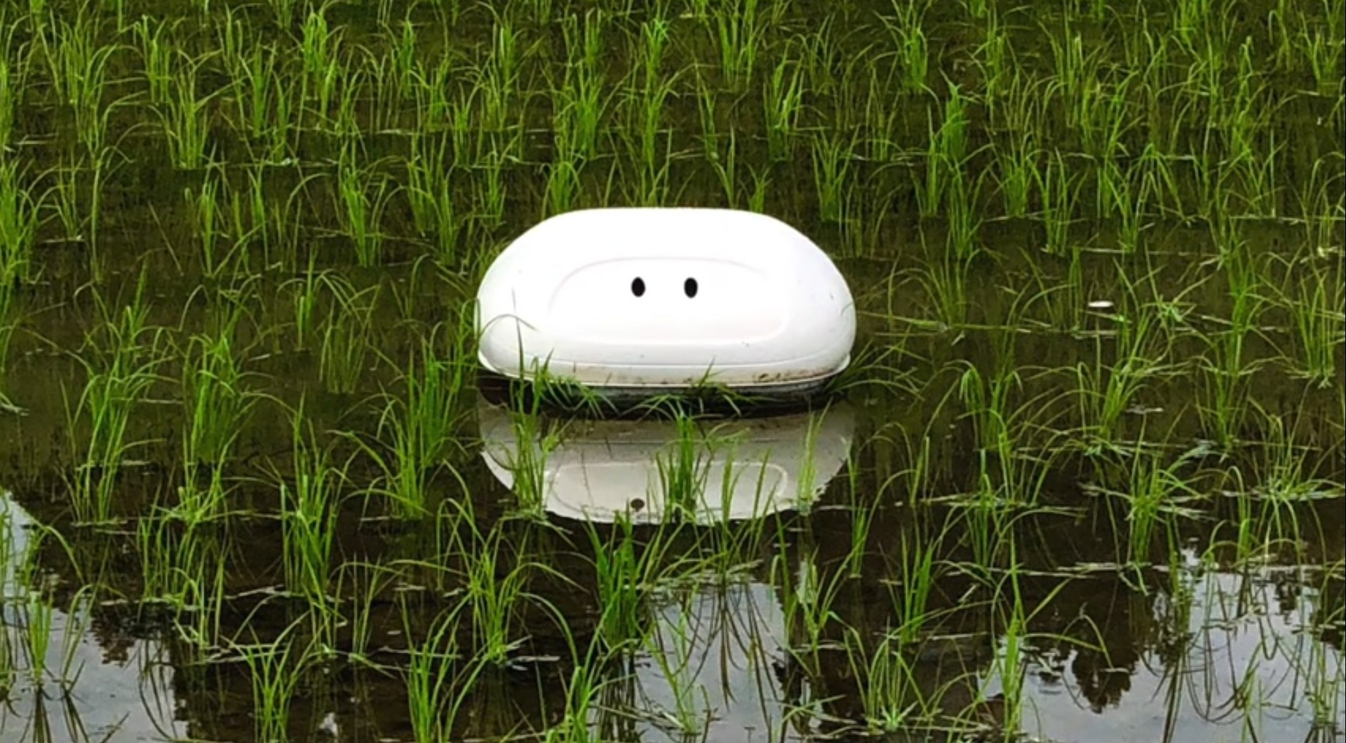 Aigamo robot: Nissan's 'Duck' Robot; Helps the Rice Farmers